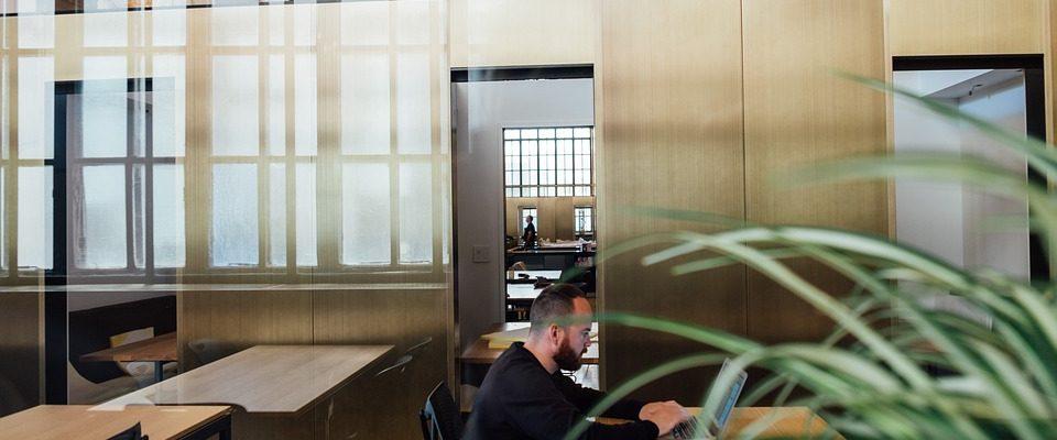 Aké sú benefity rastlín v kanceláriách?