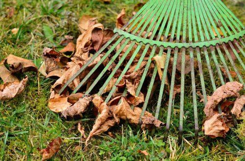 Co udělat na zahradě ještě předtím, než přijde zima
