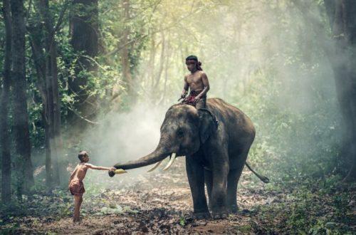 Jazda na slonoch je v Thajsku hitom. Slony sú však týraní